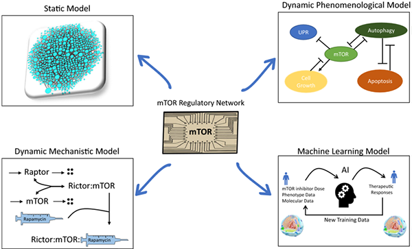 A Systems Biology Roadmap to Decode mTOR Control System in Cancer